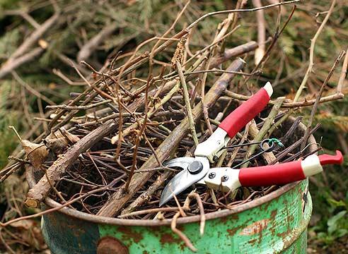 В марте основными работами являются обрезка деревьев и кустов