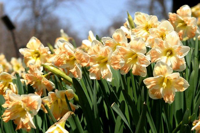 В апреле можно срезать первые цветы
