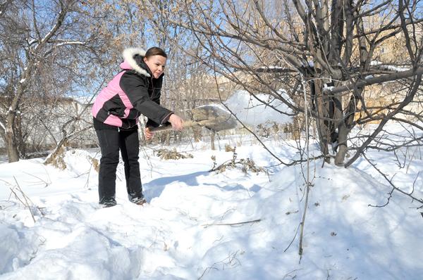 Снежный покров будет хорошим помощником, который обязательно убережет многолетние растения от промерзания