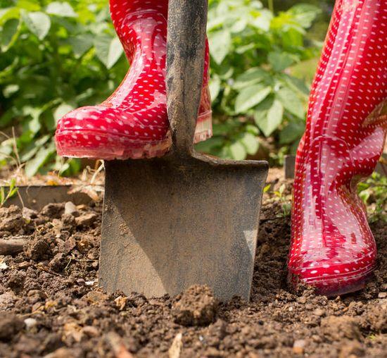 Посевной лунный календарь на май 2019 года: благоприятные и неблагоприятные дни для работ в саду и огороде (обновлено)