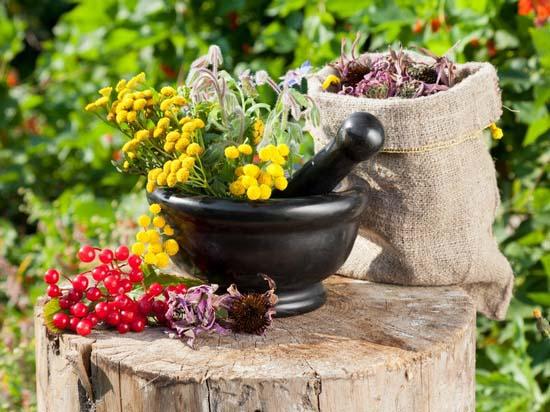 Лунный посевной календарь на июль 2019 года: чем заняться в саду и огороде в течение месяца (обновлено)