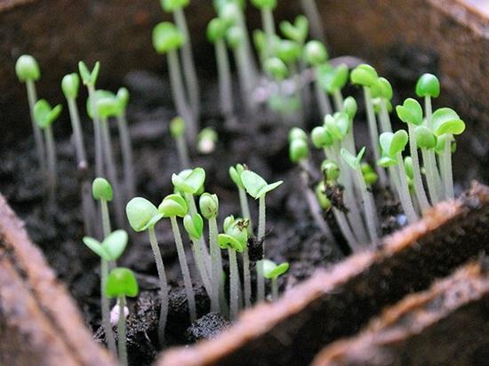 Как правильно осуществить посадку семян в 2019 году согласно лунному календарю (обновлено)