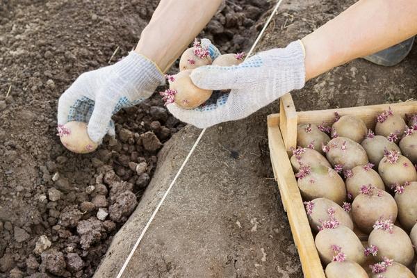 Лунный посевной календарь на 2019 год в Украине (для проведения работ в саду и огороде) - (обновлено)