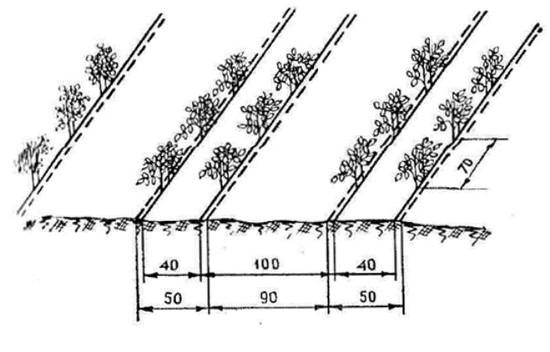 Особенности и сроки посадки томатов по лунному календарю на 2019 год (обновлено)