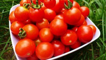 когда сажать помидоры на рассаду в 2017 году